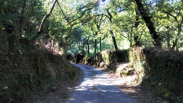 Camino sombreado por árboles