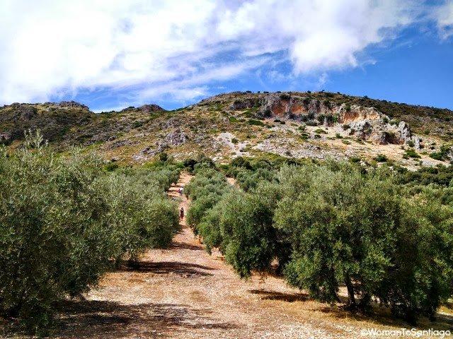 foto de olivos