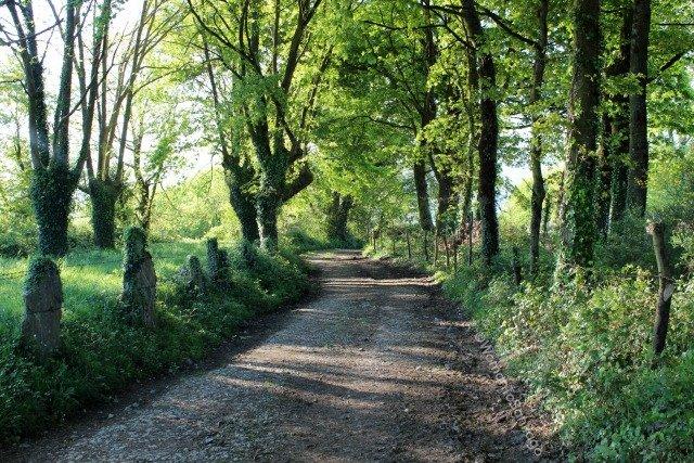 foto de bosque