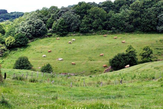 camino-frances-prados-vacas-taller-del-camino-de-santiago-womantosantiago