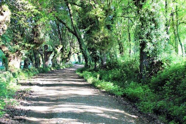 camino-frances-taller-de-camino-womantosantiago-bosque