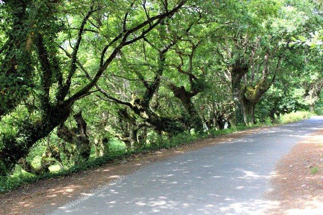 camino-frances-taller-del-camino-womantosantiago-carretera.