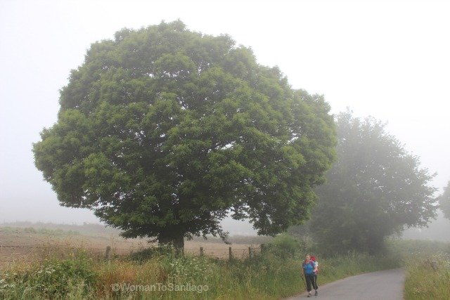 camino-frances-taller-del-camino-womantosantiago-niebla