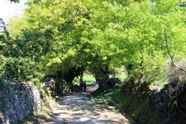 camino-frances-taller-del-camino-womantosantiago-peregrinos-bosque