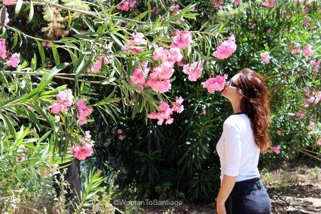 camino-mozarabe-cordoba-rosas-womantosantiago