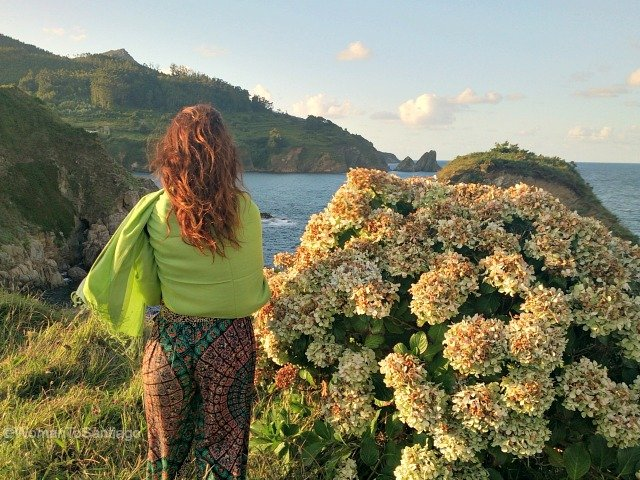 camino-del-mar-carino-a-coruna-acantilado-hortensias