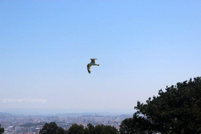 coruna-camino-de-santiago-ingles-monte-de-san-pedro-vistas