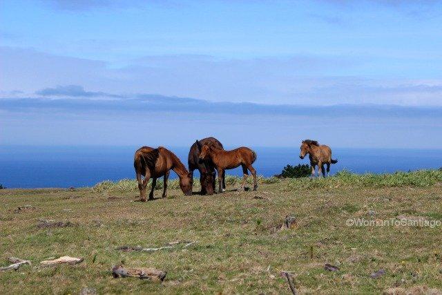 sierra-de-la-capelada-camino-del-mar-womantosantiago-caballos