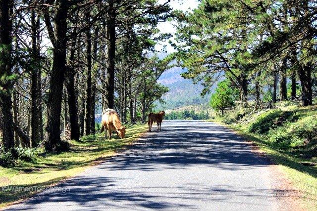 sierra-de-la-capelada-camino-del-mar-womantosantiago-vacas