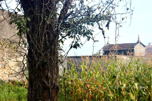 negreira-camino-de-santiago-fisterra-horreo-vista