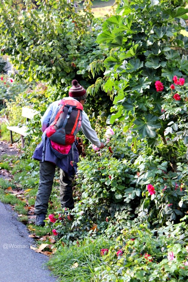 foto de peregrina con rosas del camino