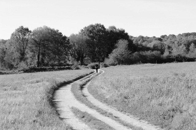 foto de senda en camino de santiago frances