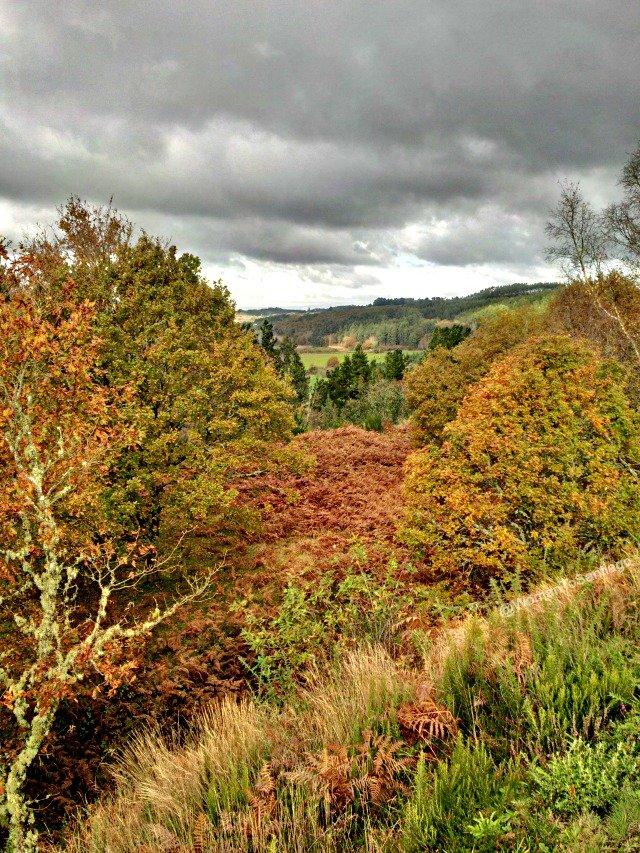 foto de bosque en otono