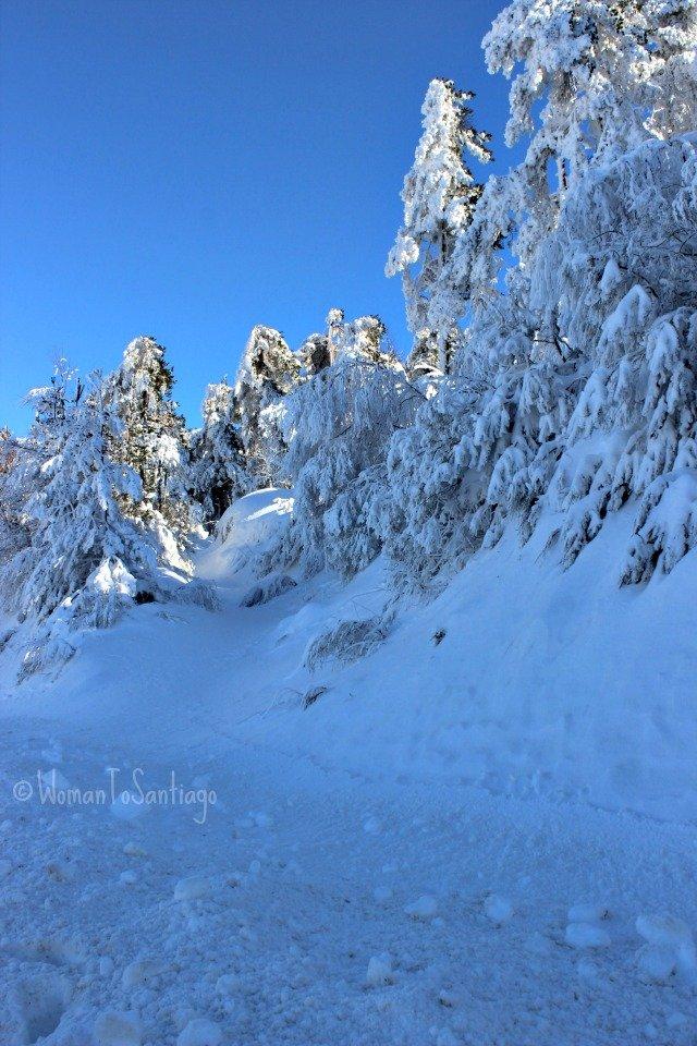 foto de bosque nevado