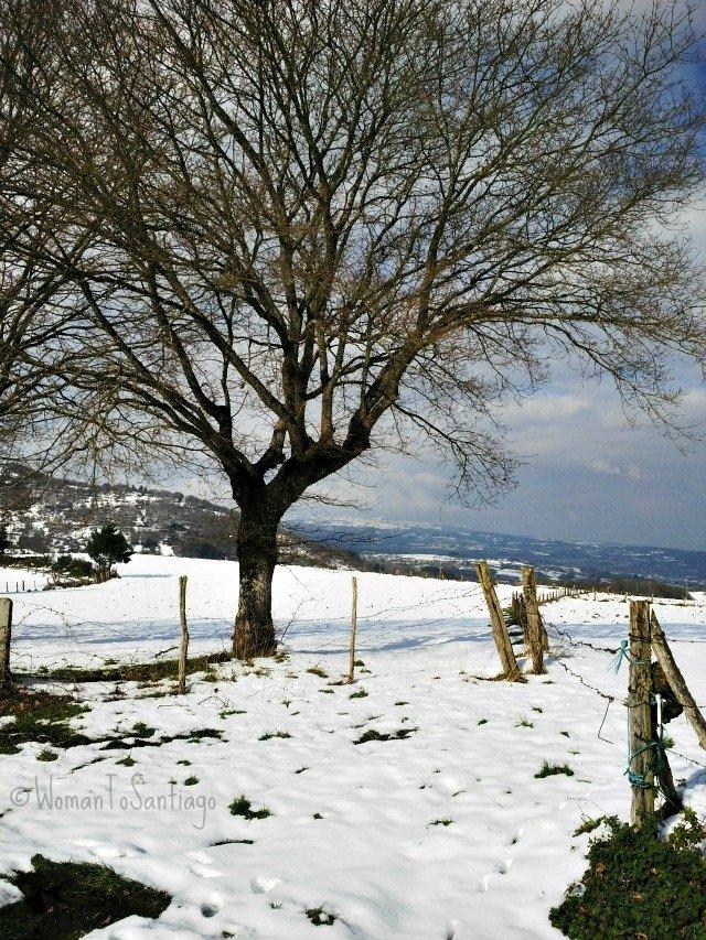 foto de la senda nevada