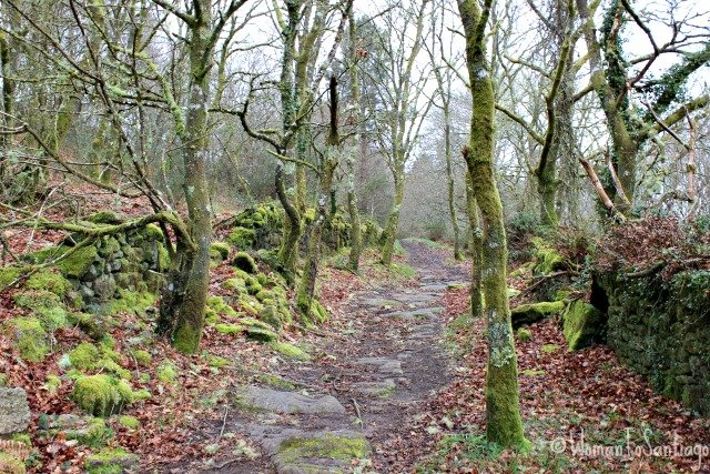 foto del bosque de san alberte