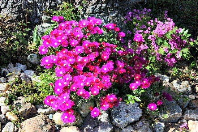 foto de flores en el camino
