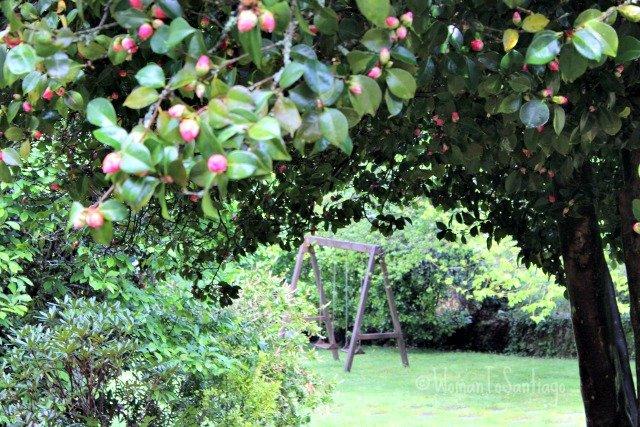 foto magnolio