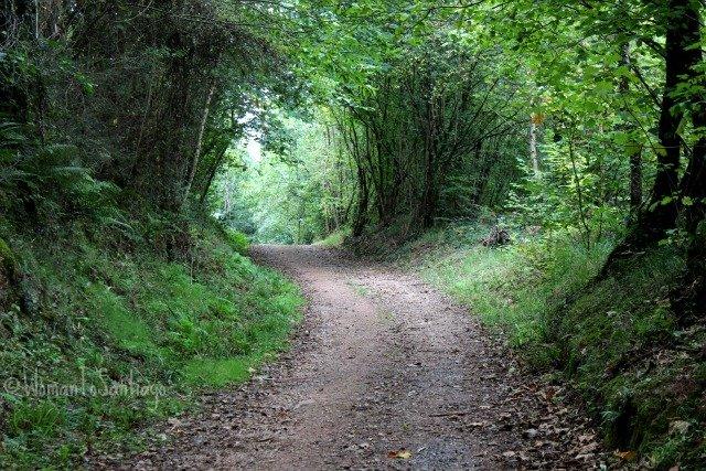 foto de la senda del camino