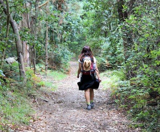 foto de bosque en camino portugues