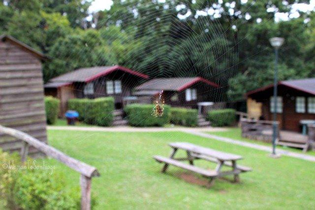 foto del camping