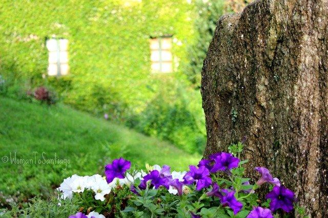 foto flores a quinta da auga