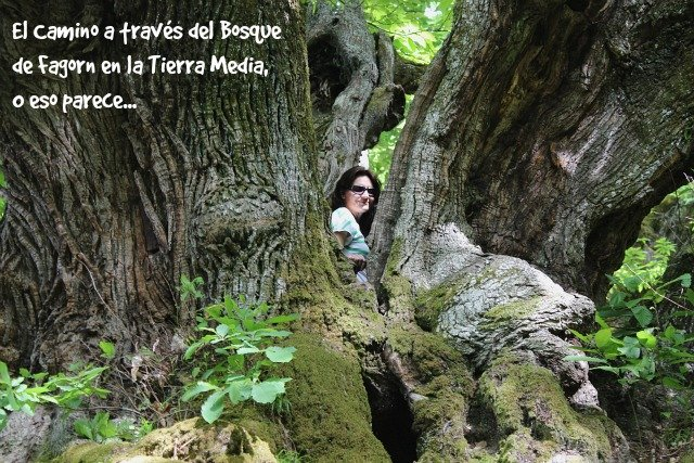 el-bosque-de-fagorn-en-el-camino
