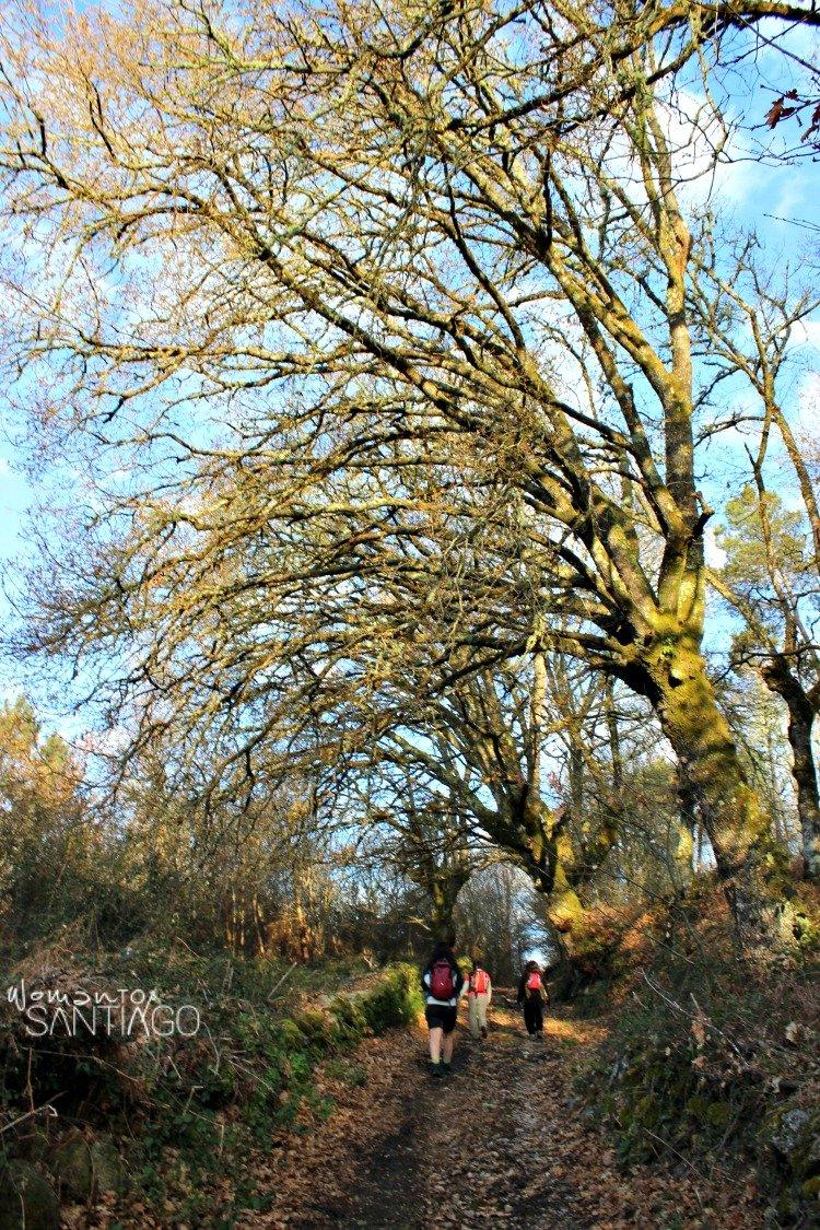 bosque-camino-sanabres
