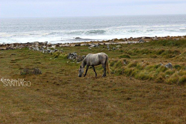 caballo-salvaje-camino-portugues-costa