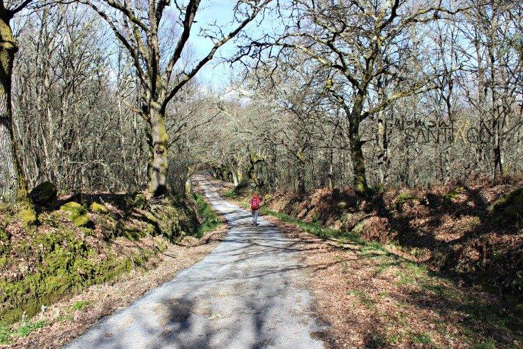 camino-de-santiago-sanabres-bosque