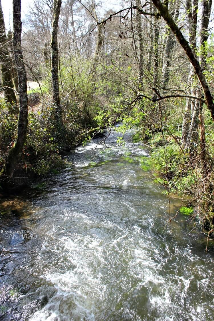 río en mitad del bosque