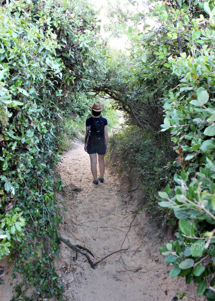 foto del camino por la playa