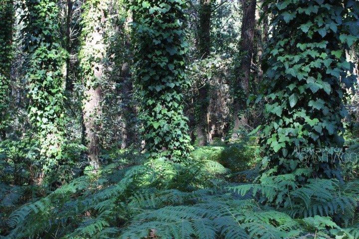 bosques-costa-da-morte-galicia
