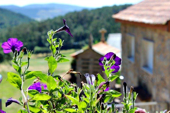 flores-casa-fontequeiroso