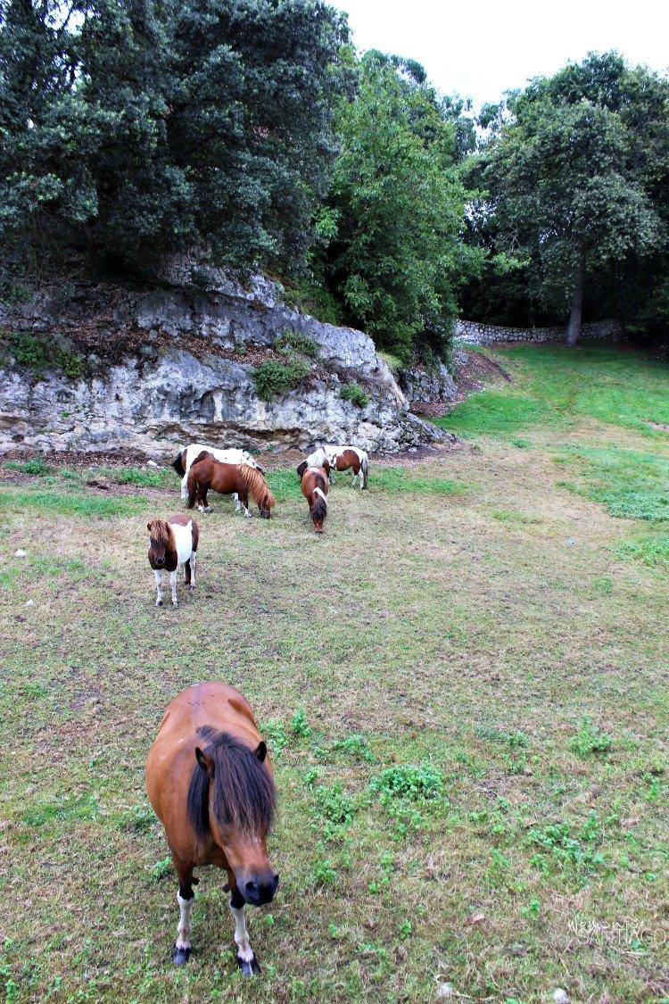 caballos-salvajes-camino-del-norte