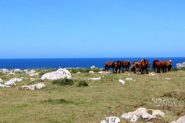 foto de caballos