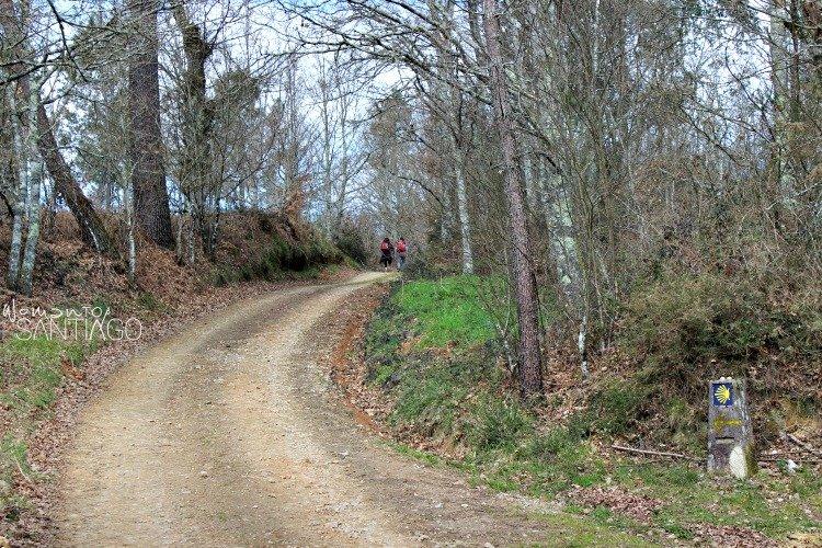 viaje-camino-de-santiago-sanabres