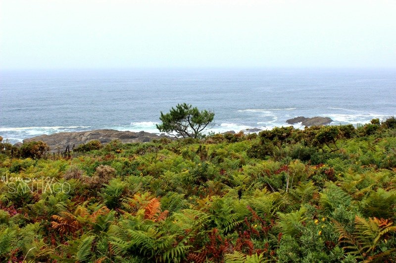 foto de la costa salvaje
