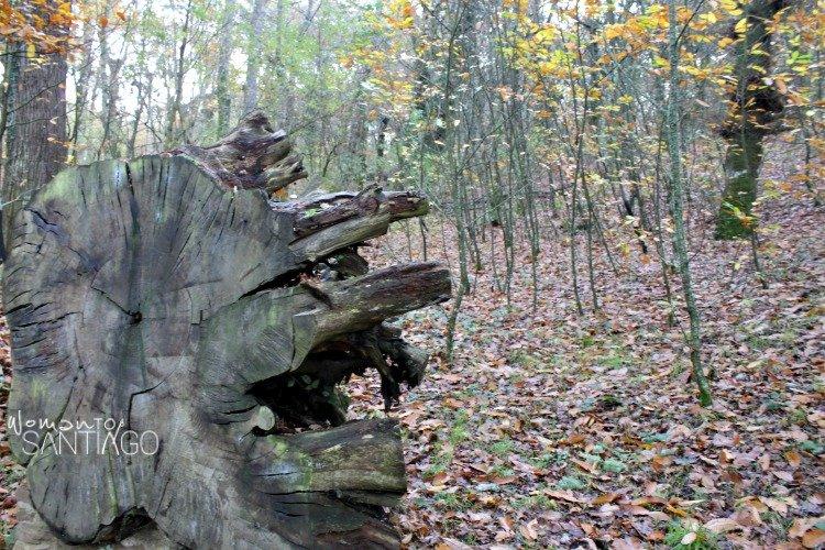 foto de tronco