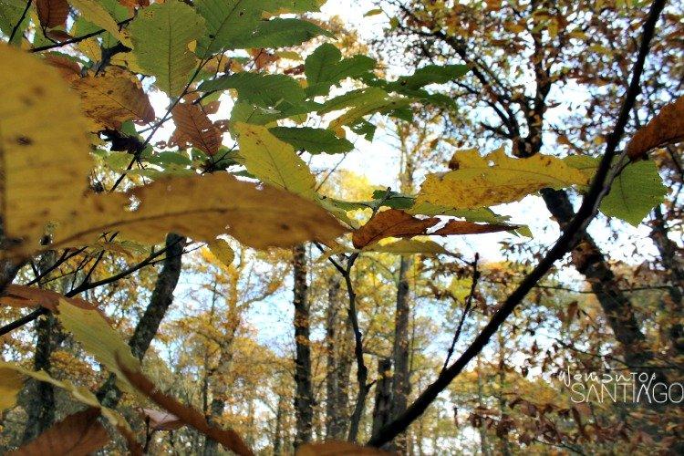 foto de hojas