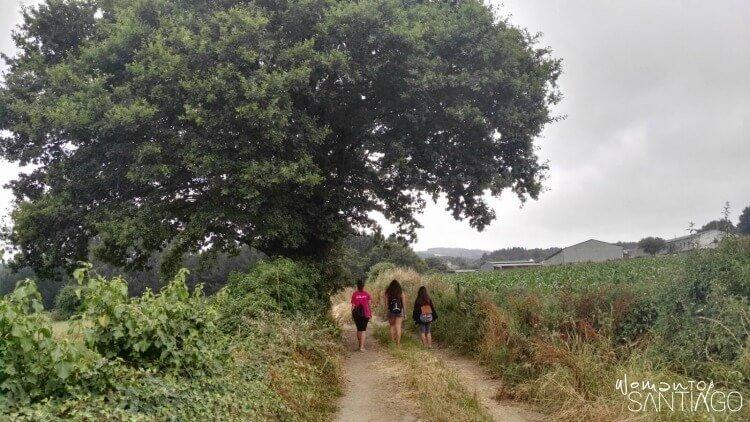 mujeres caminando por sendero del camino
