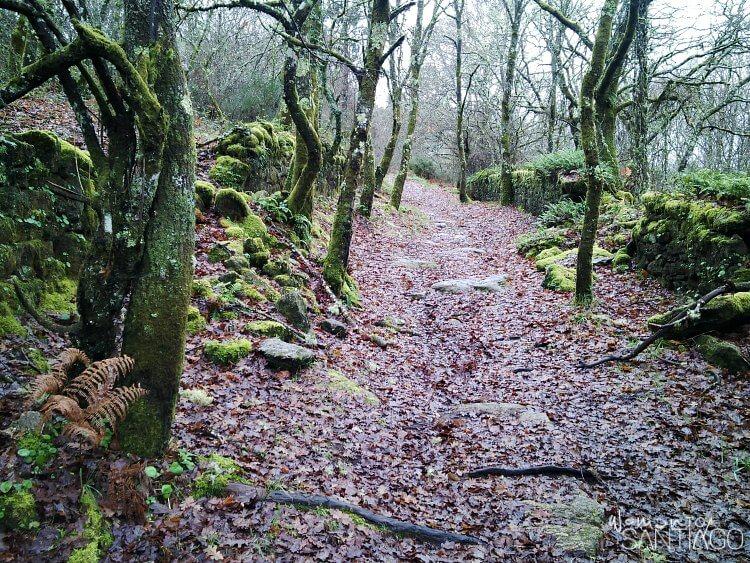 sendero del camino de santiago con hojas caidas