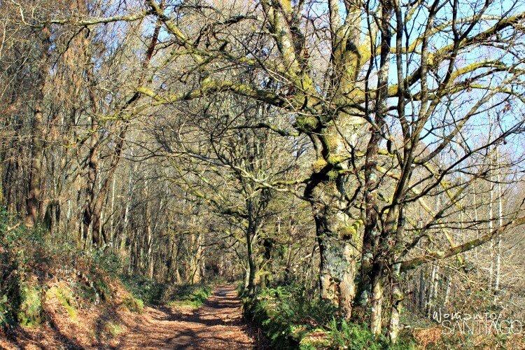 foto de bosque con sendero