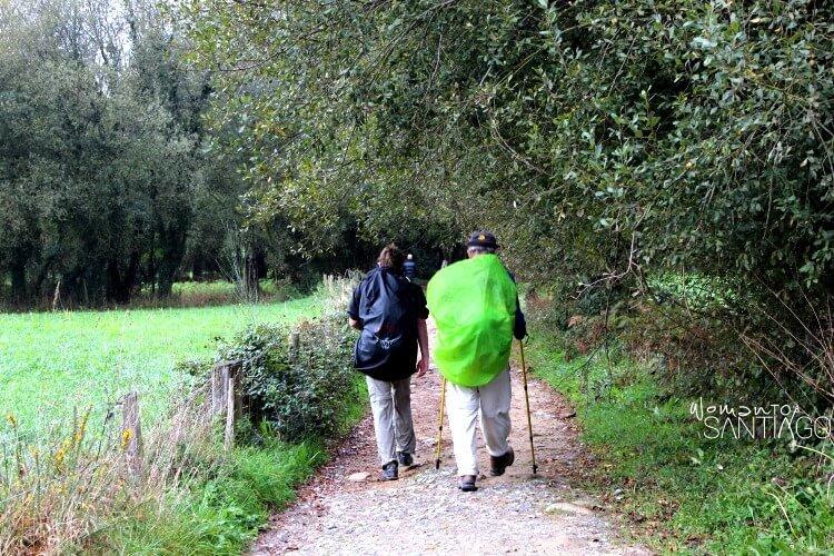 peregrinos en el camino por un sendero con un gran árbol verde