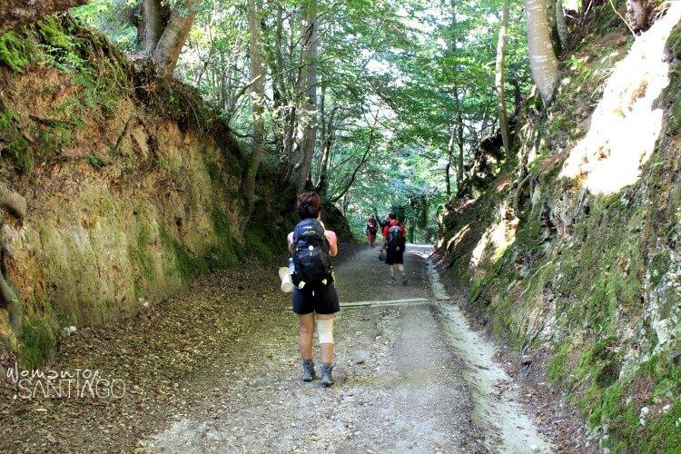 peregrinos en el camino de santiago a través de una senda verde