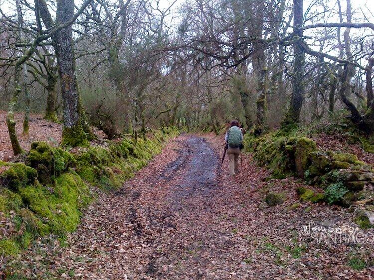 sendero del camino de santiago con hojas marrones