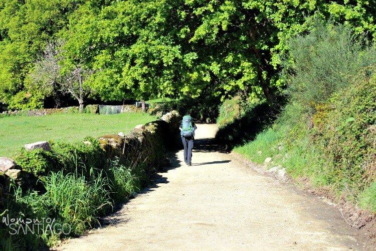 peregrino del camino de santiago entre árboles