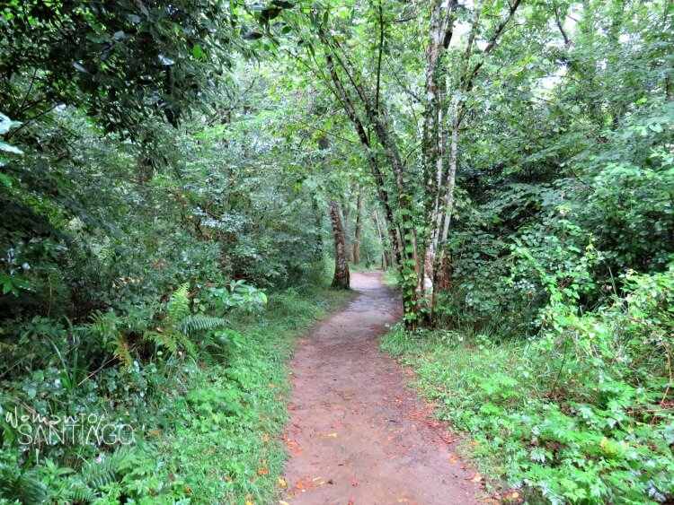 camino atravesando el bosque