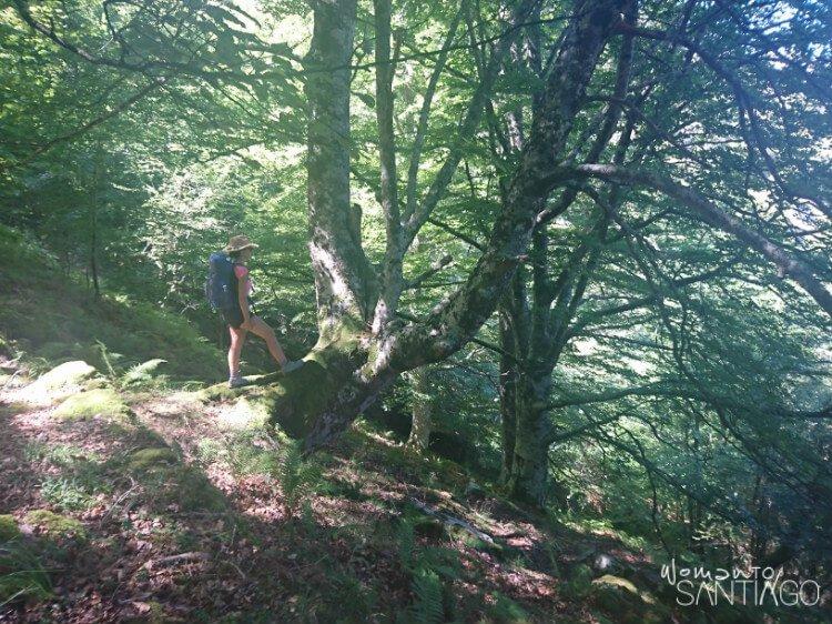 noelia paseando por el bosque