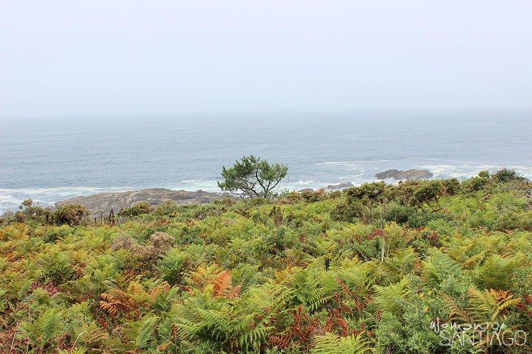 foto de la costa del camino portugues